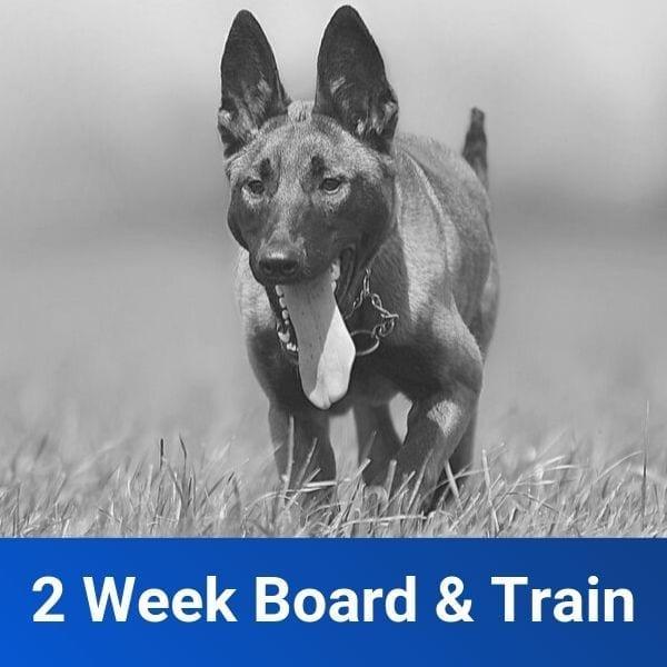 2 Week Board and Train