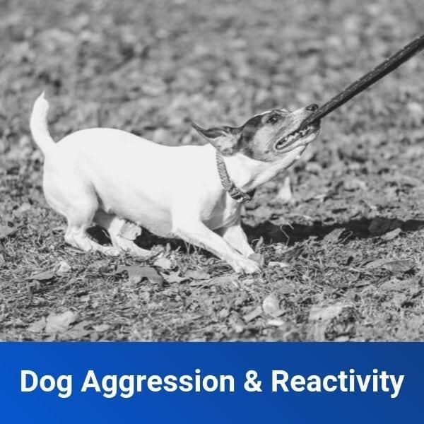 Dog Aggression Reactivity