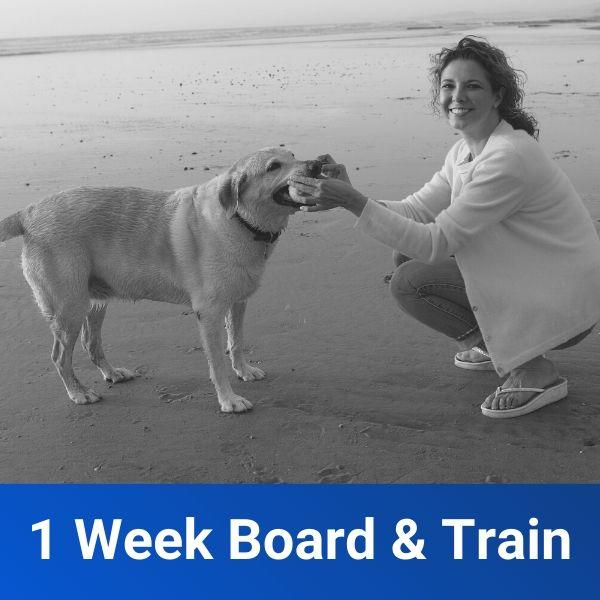 1 Week Board Train