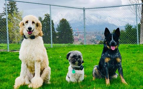 Salt Lake City Dog Training