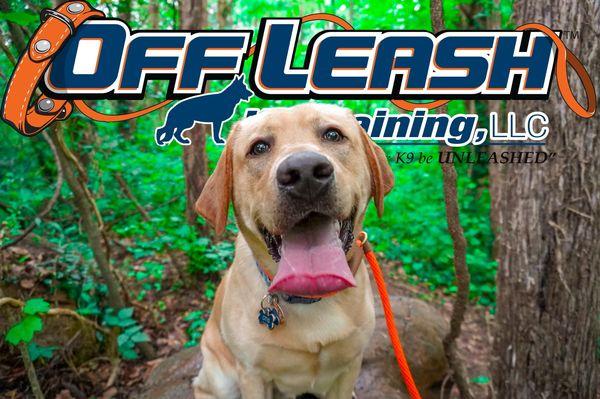 Off Leash Dog Trainers OLK9 resize